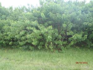 342 Sw Millard Drive, Port Saint Lucie, FL 34953