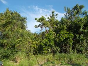 1701 Se Mariana Road, Port Saint Lucie, FL 34952