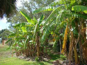 5001 Indian Bend Lane, Fort Pierce, FL 34951