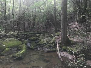2690 Brenon Wood Ln, Signal Mountain, TN 37377