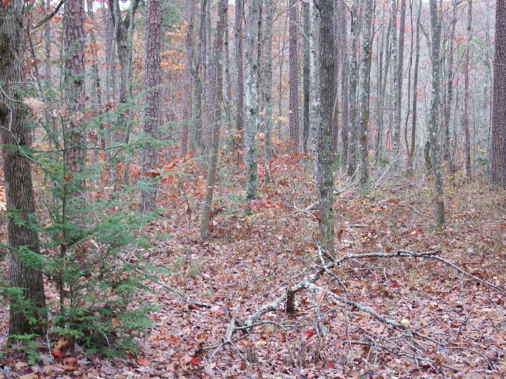 411 Tall Tree Tr, Dunlap, TN 37327