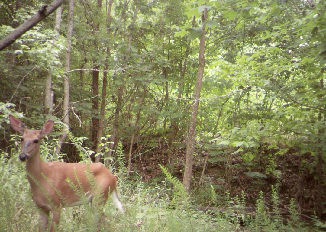 50 Laurel Creek, Whitwell, TN 37397