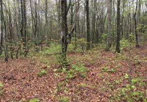 0 Maggie Bluff Cir, Lookout Mountain, GA 30750