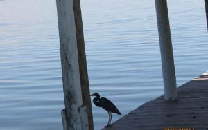 2929 Placid View Dr, Lake Placid, FL 33852