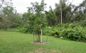 6 Pine Tree Ct, Lake Placid, FL 33852