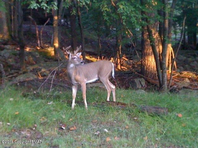 G17 Wolf Hollow Rd, Lake Harmony, PA 18624