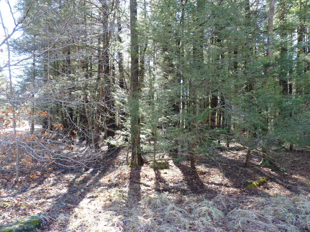 Lot 167 King Arthur Road, Blakeslee, PA 18610
