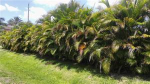 1219 Sw 48th Ter 104, Cape Coral, FL 33914