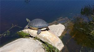 17832 Courtside Landings Cir, Punta Gorda, FL 33955