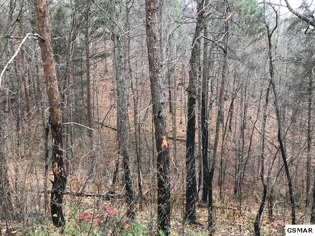 Lot 8 Timber Ridge Way, Sevierville, TN 37876