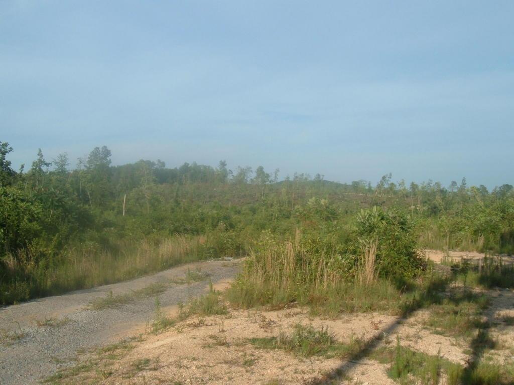 Reed Rd, Ten Mile, TN 37880