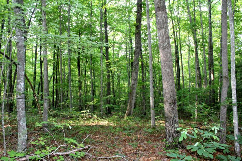 Spirit Ridge Trail Rd, Jamestown, TN 38556