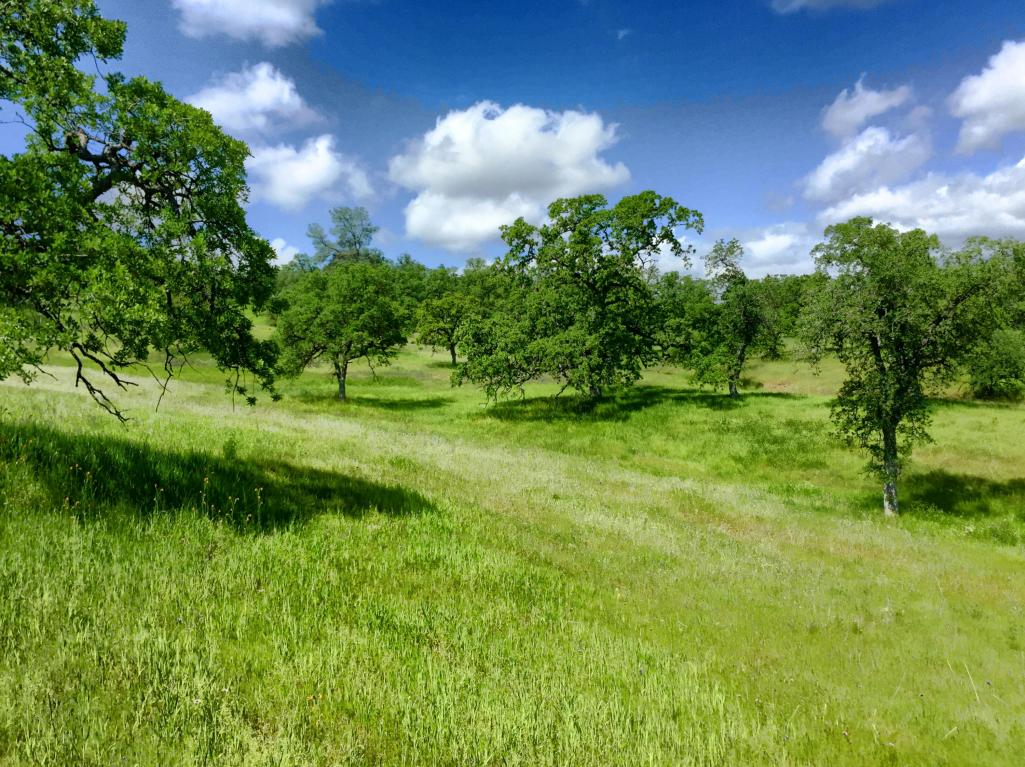 40 Acres Tar Bully - Lot 198, Ono, CA 96047
