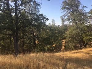 Southwood/ridgewood, Cottonwood, CA 96022