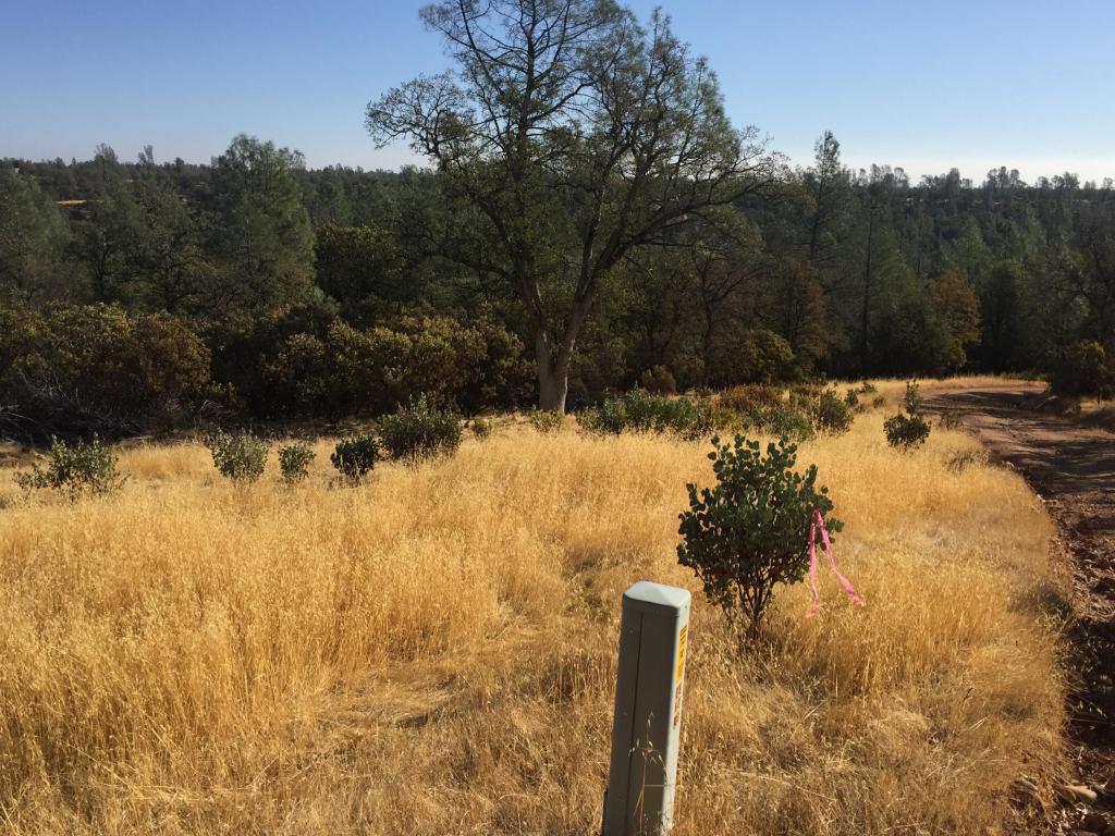Small Farms Dr., Igo, CA 96047