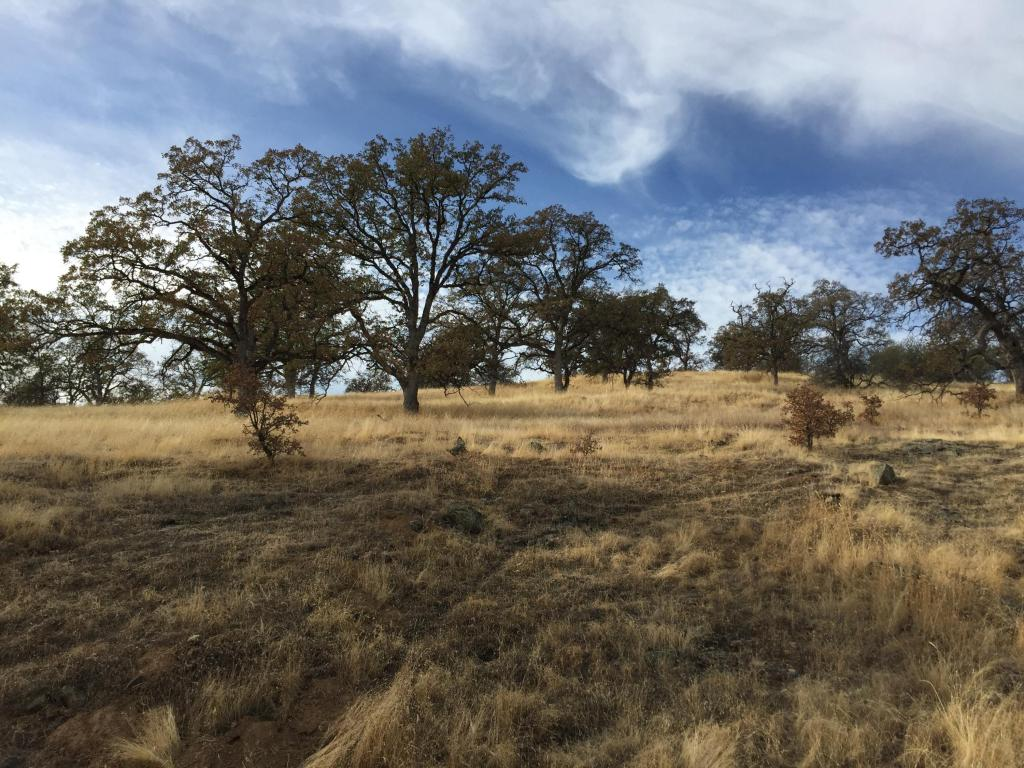 40 Acres Fiddlers, Ono, CA 96047