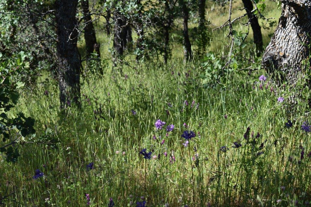 Lot 30 Tract 91-1004 Eagle Valley Ct, Red Bluff, CA 96080