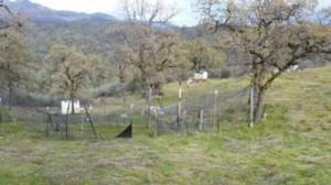 Cottonwood Creek Rd, Igo, CA 96047