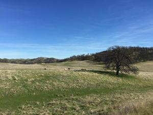 40 Acres Fiddlers Rd, Ono, CA 96047