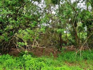 2171 Sw Leafy Road, Port Saint Lucie, FL 34953