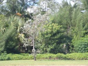 Xxx S Ocean Drive, Hutchinson Island, FL 34949