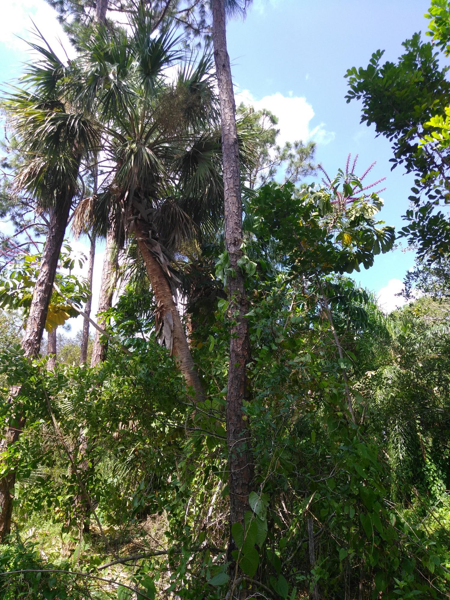 6906 Winter Garden Parkway, Fort Pierce, FL 34951