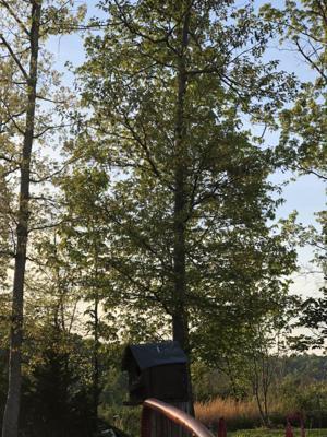 2001 Sticher Tr, Harrison, TN 37341