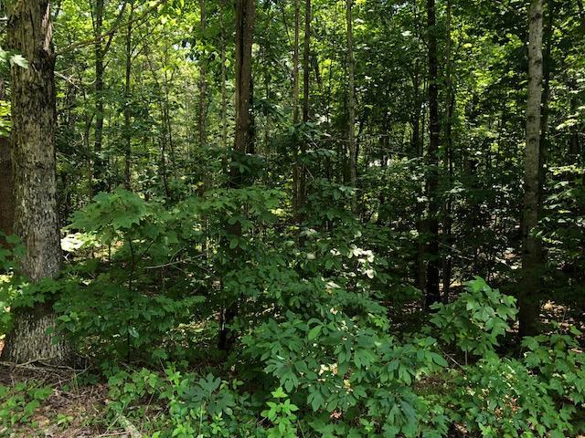 13 Raven Cliff Rd, Graysville, TN 37338