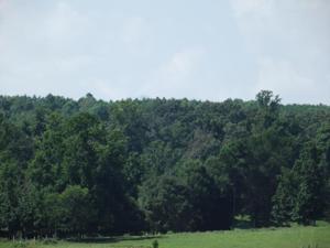 1037 Oak Grove Rd, Decatur, TN 37322