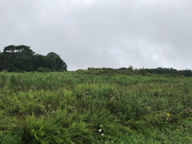 0 Gray Rock View Lot 253, Pikeville, TN 37367