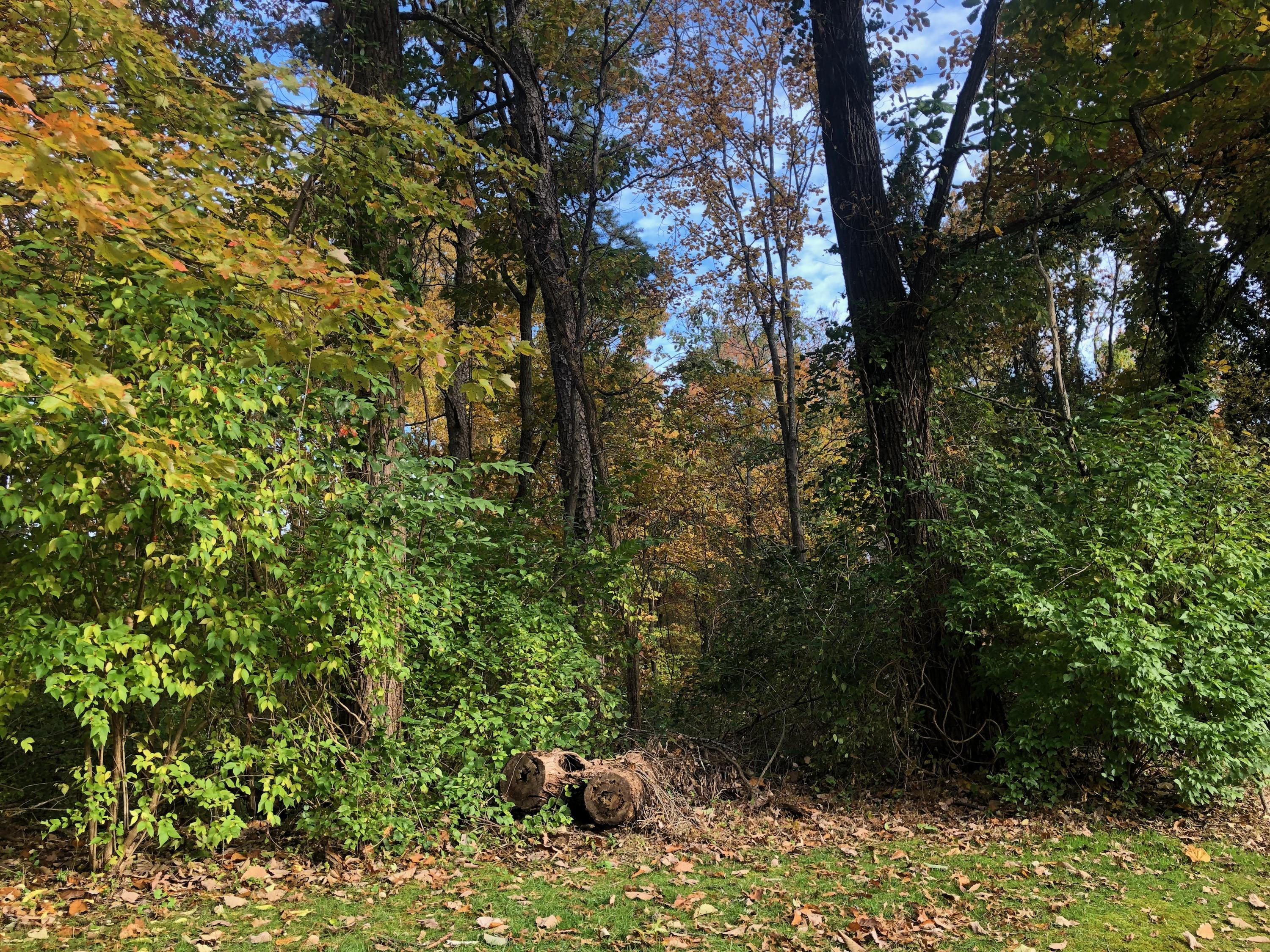 58 Carriage Hill Lot 36, Signal Mountain, TN 37377