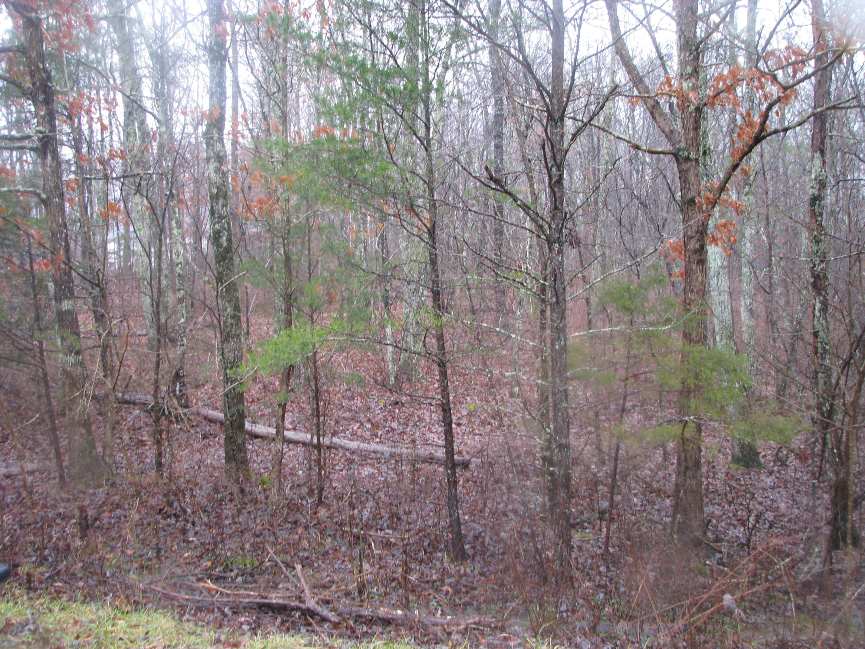 Lot 4 Woodall Point Rd, South Pittsburg, TN 37380