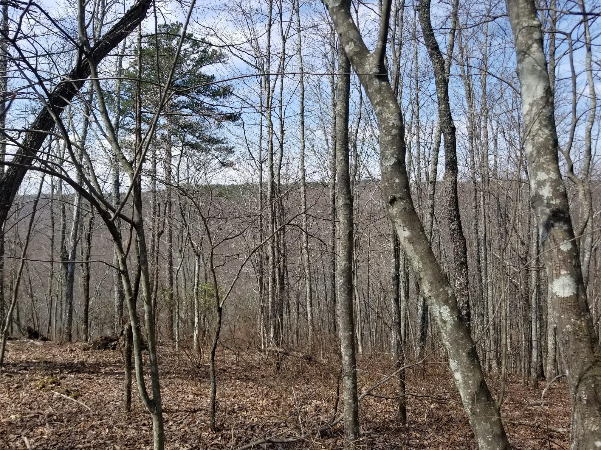 93 Falling Cliff Drive, South Pittsburg, TN 37380