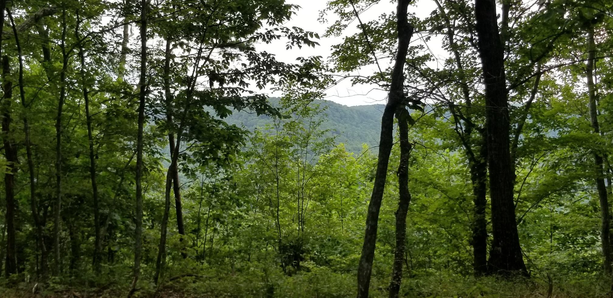 Lot 8 Old Harris Turnpike Road 8, South Pittsburg, TN 37380