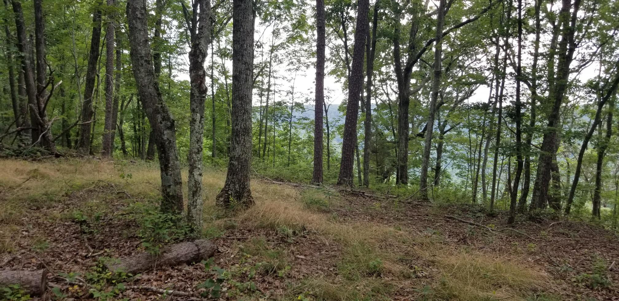 Lot 9 Old Harris Turnpike Road 9, South Pittsburg, TN 37380