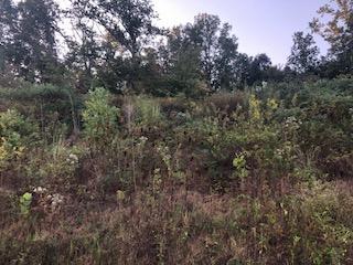 1299 Springview Dr, Chattanooga, TN 37421