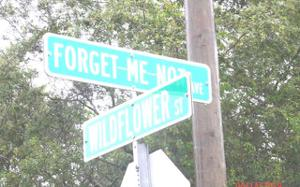 3146 Forget-me-not Ave, Lake Placid, FL 33852