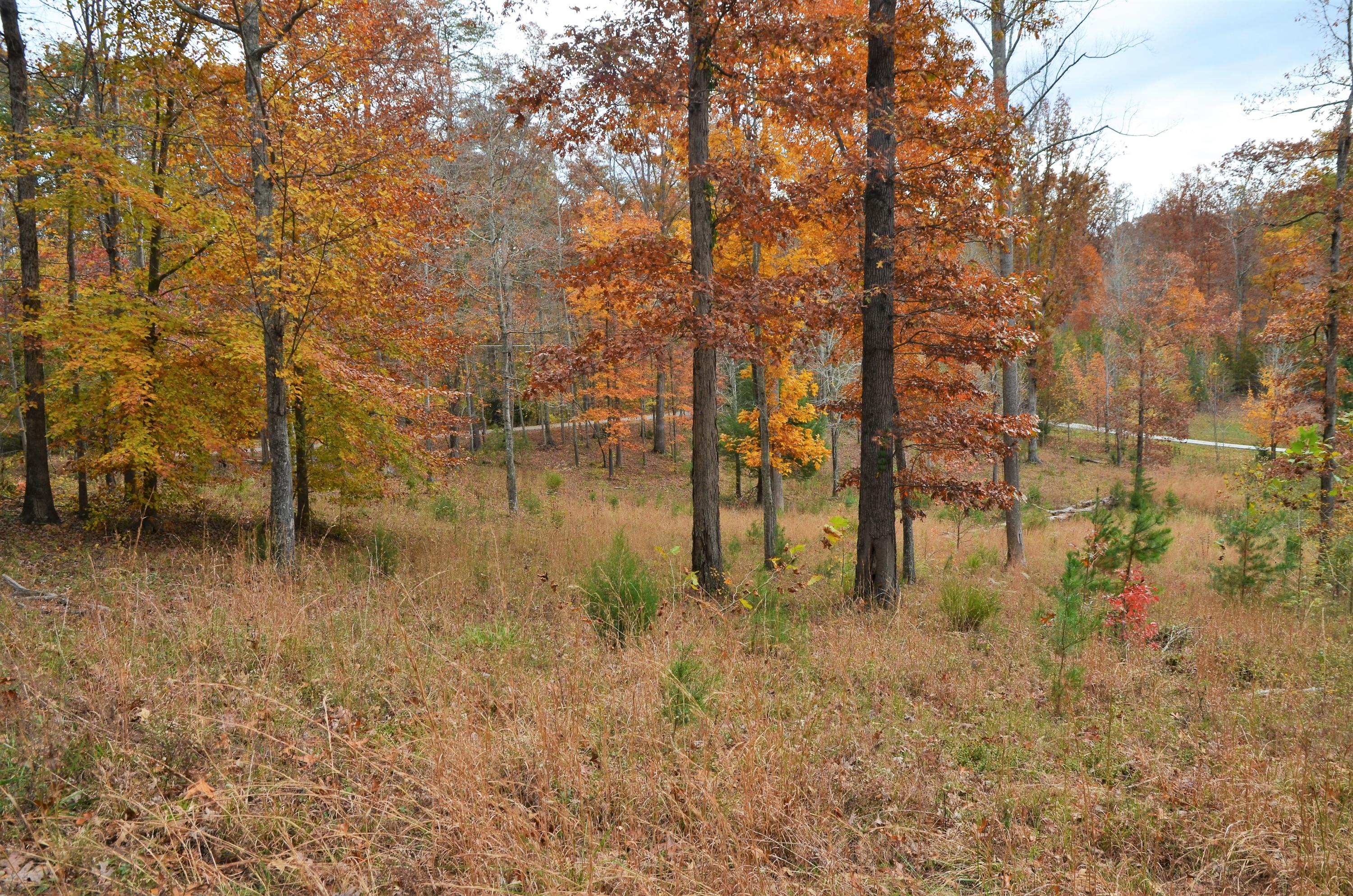 Fox Ridge Lane, Caryville, TN 37714