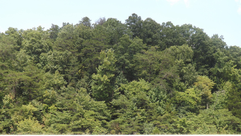 Panther Creek, Sneedville, TN 37869