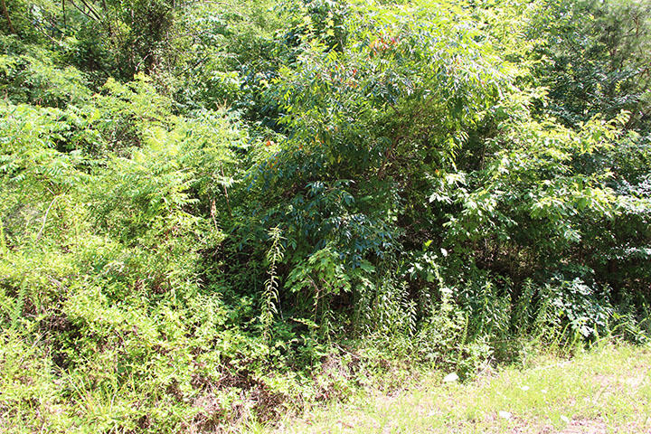 Trail Way, Newport, TN 37821