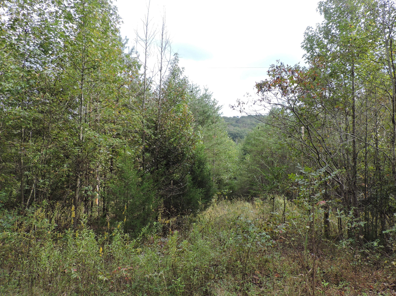 County Road 188, Niota, TN 37826