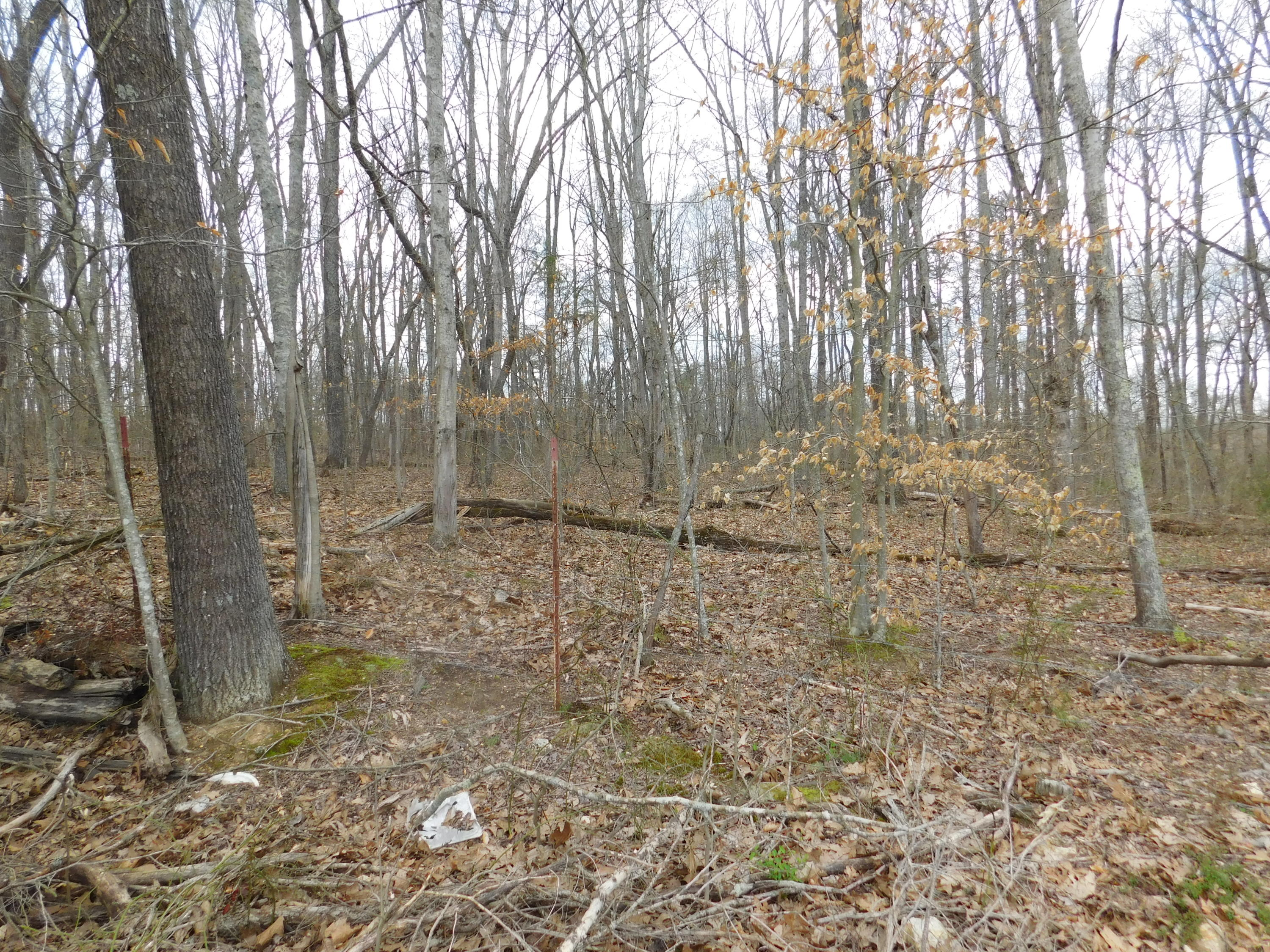 Off Cave Springs Rd, Tazewell, TN 37879