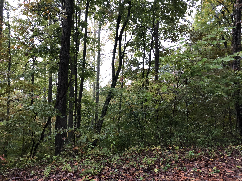 Overlook Trail Lots 54 & 55, Maynardville, TN 37807