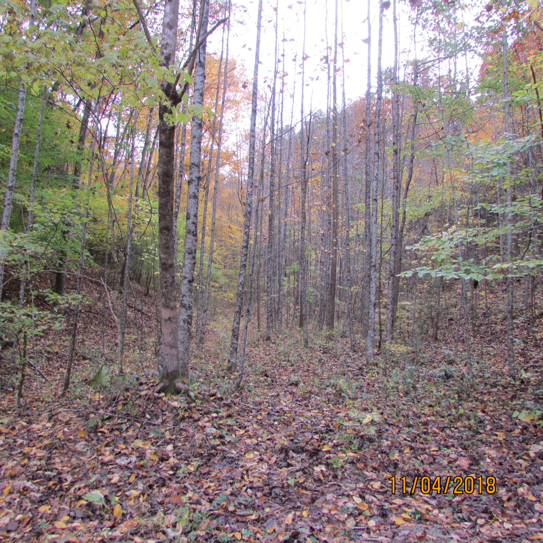 Fern Hollow Rd, Townsend, TN 37882
