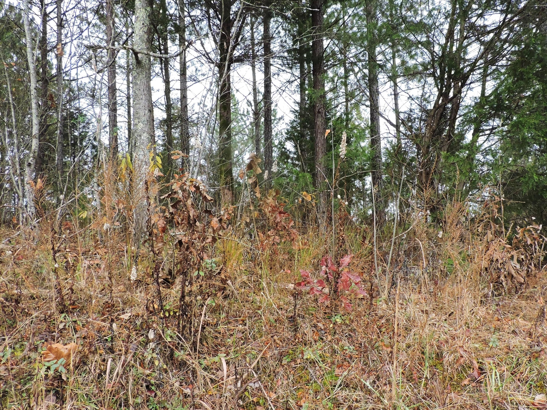 County Road 226, Niota, TN 37826