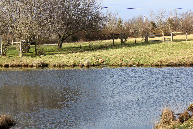 5949 Beaver Hill Rd, Pikeville, TN 37367