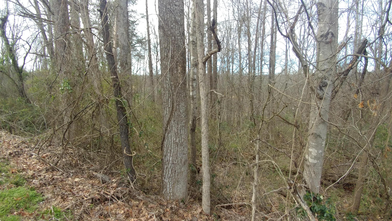 Clear View Drive, Rockwood, TN 37854