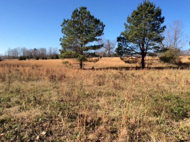 Fritton Spur, Middlebury, TN 38052