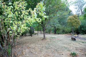 1934 *herbscenta, Redding, CA 96003