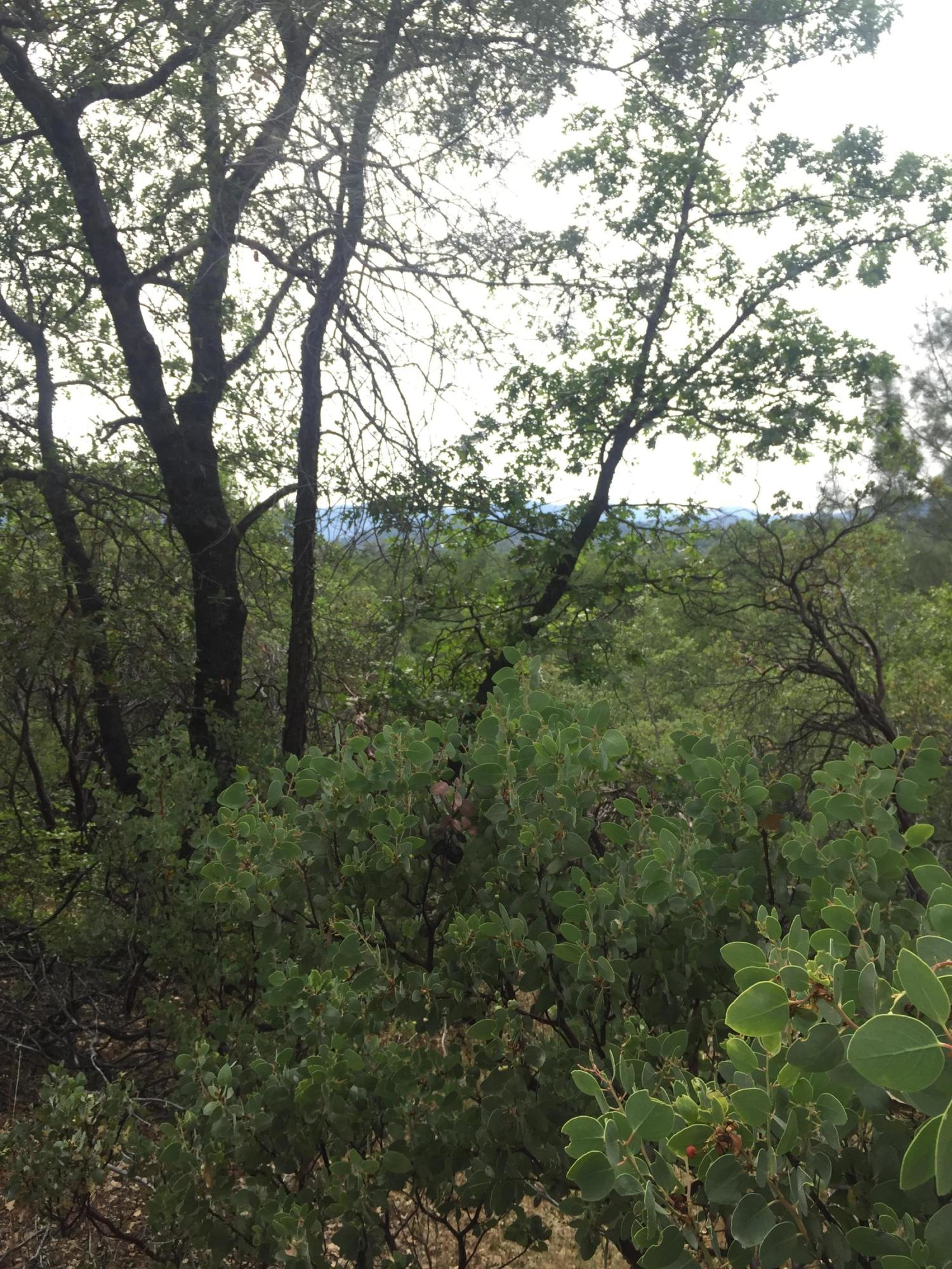 Valley Creek, Redding, CA 96003